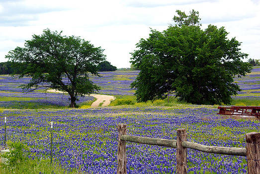 Field of Bluebonnets by Erica Stubbs