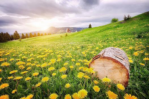 Field of dandelion by Nermin Smajic