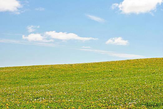 Field of Dandelions by Judy Salcedo