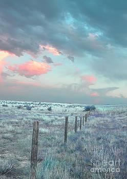 Anthony Wilkening - Field of Dreams