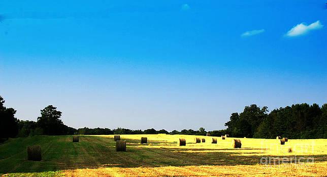 Field of Dreams by Jinx Farmer