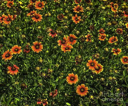 Dale Powell - Field of Flowers