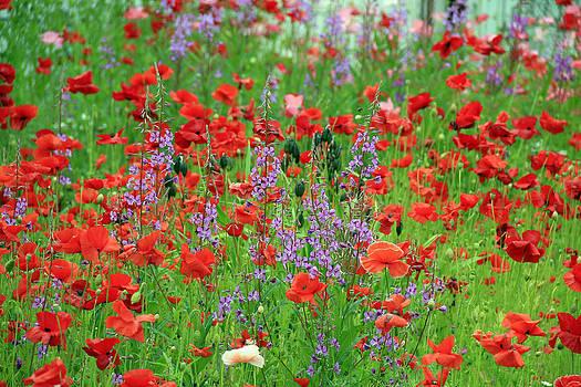 Field of Flowers by Gladys Turner Scheytt