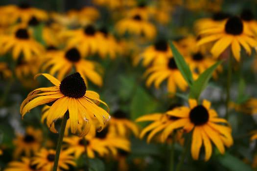 Field of Flowers by Laurie Poetschke