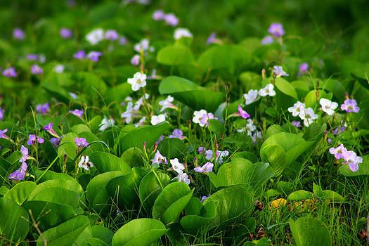 Field of Flowers by Sherry Hudson