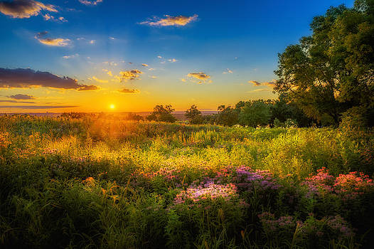 Field of Flowers Sunset by Mark Goodman
