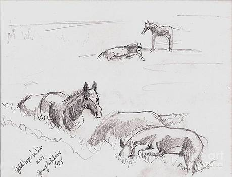 Field of Foals by Jamey Balester