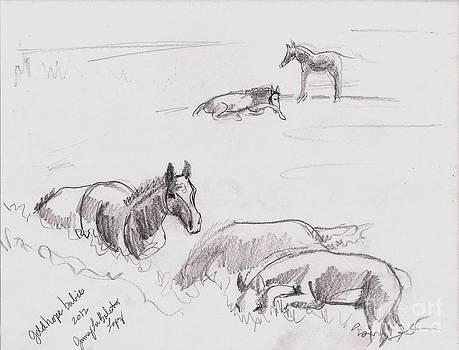 Jamey Balester - Field of Foals