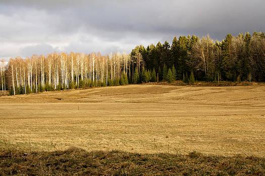 Field Of Gold by Fredrik Ryden