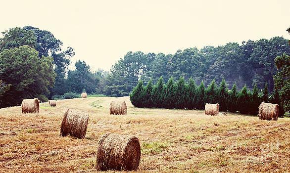 Field of Hay by Jinx Farmer