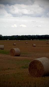 Field of Hay by Ted Mahy