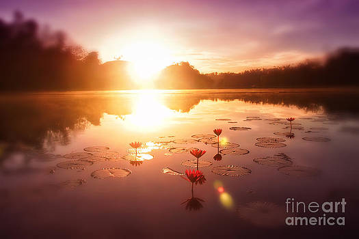 Field of Lily Dreams by Jojie Alcantara