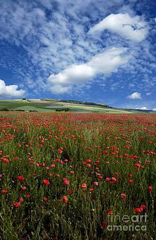 BERNARD JAUBERT - Field of poppies. France