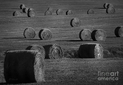 Field of Round Hay Bales by E B Schmidt
