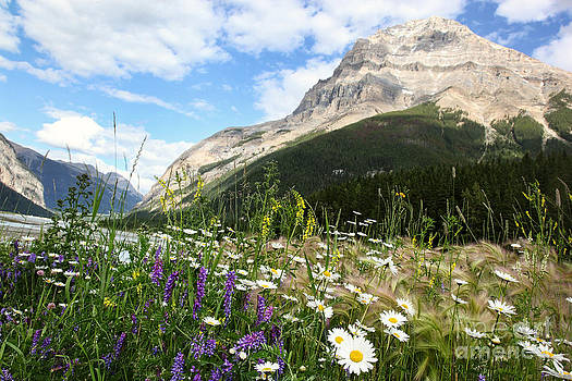 Sandra Cunningham - Field of wild flowers near the Rocky Mountains