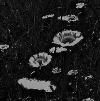 Field of Wildflowers by Tara Miller