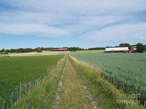 Field Path by Robin Maria Pedrero