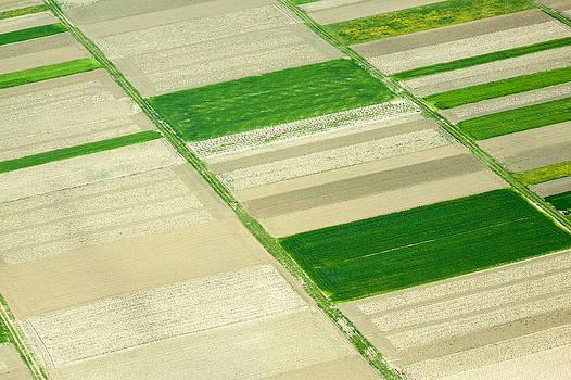 Fields in Spring 3 by Davorin Mance