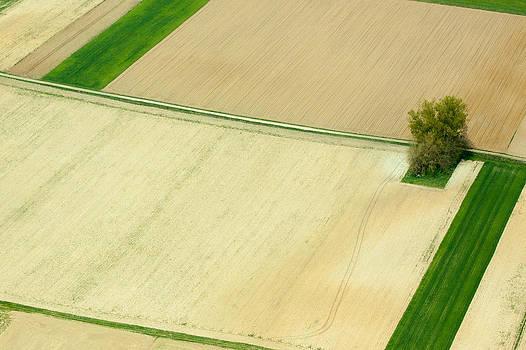 Fields in Spring 4 by Davorin Mance
