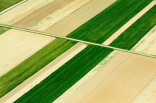 Fields in Spring 5 by Davorin Mance