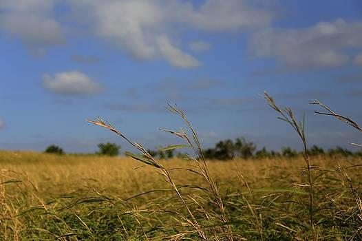 Fields by Mario Legaspi