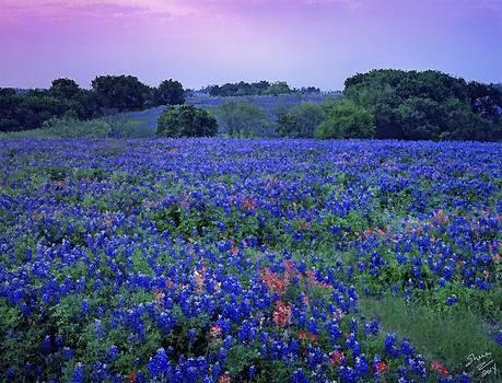 Shere Crossman - Fields of Blue