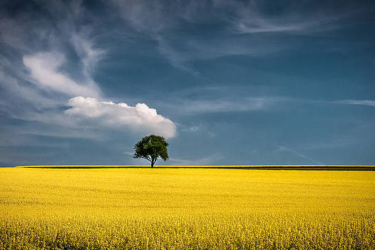 Fields of Gold by Andreas Wonisch