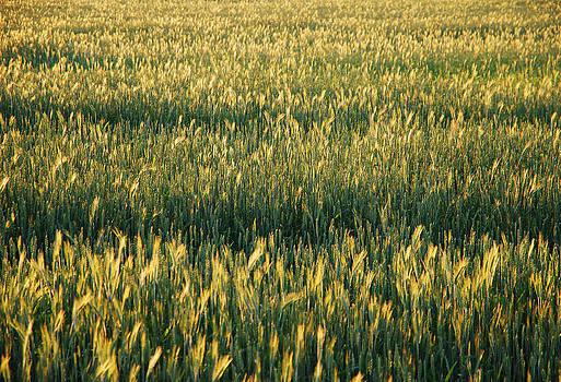 Ramunas Bruzas - Fields of Gold