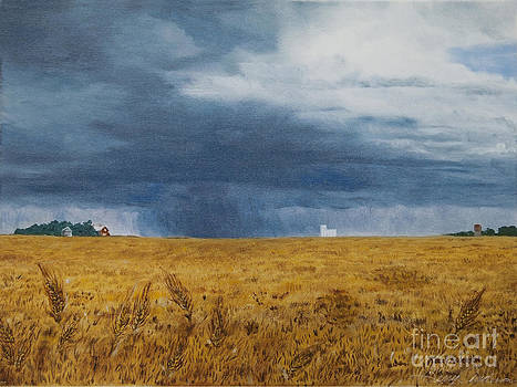 Fields of  Gold by Terry Anderson