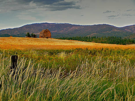 Fields Of Grain And Weeds by Dan Quam