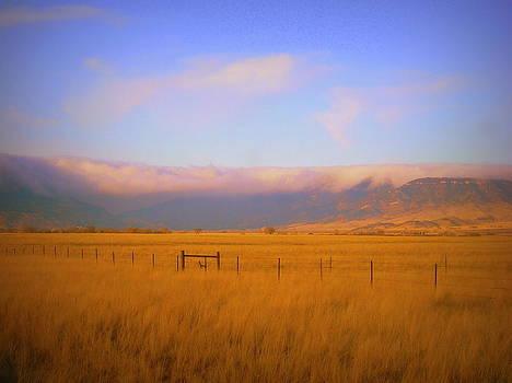 Fields of Grain by Johanna Elik