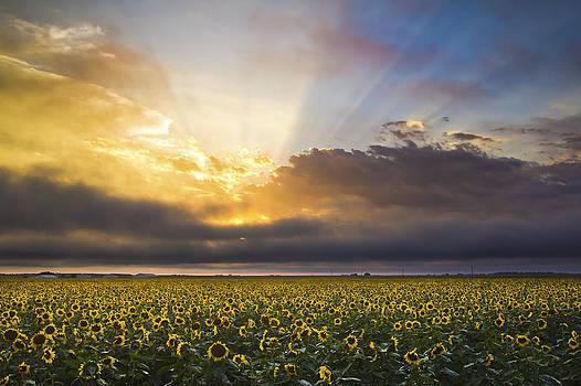 Fields of Heaven by Evan Ludes