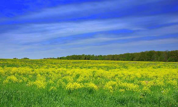 Fields of Yellow by Denny Ragan