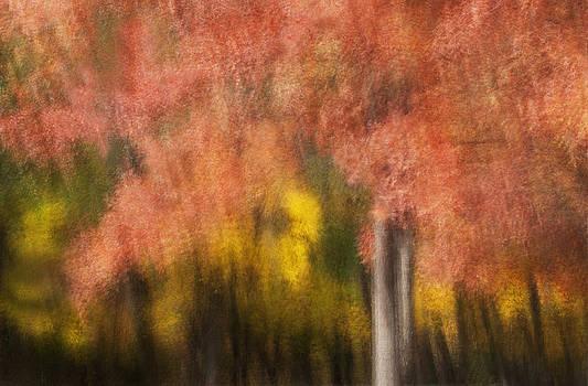 Fiery autumn by Jay Krishnan