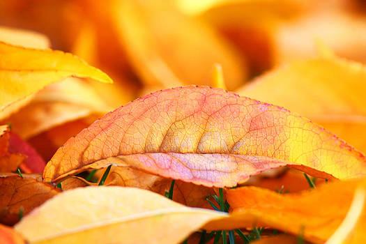 Veronica Vandenburg - Fiery Autumn Leaves