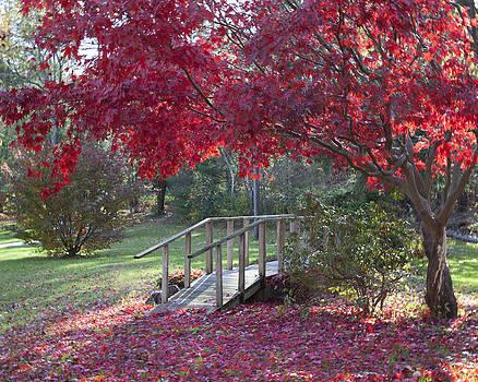 Fiery Autumn Tree with Bridge by Denise Rafkind