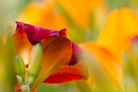 Fiery Flora by Mary Amerman