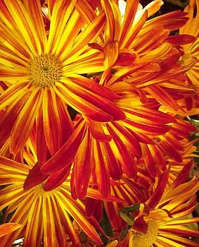 Fiery Flowers by Lisa Lieberman
