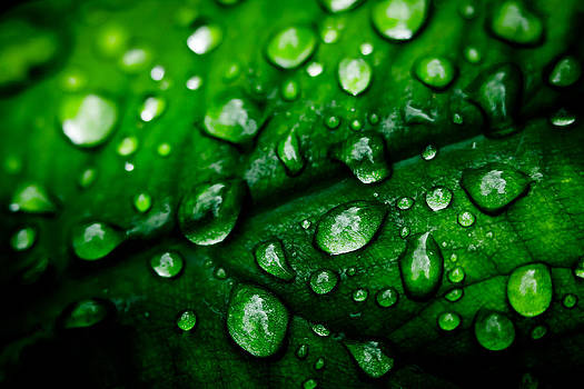 Fifty Shades of Green by Jon Gray