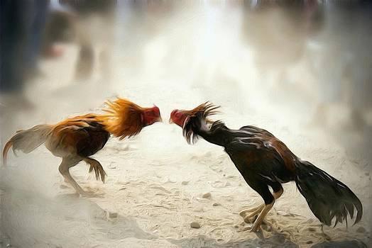 Fighting cocks by Shreeharsha Kulkarni