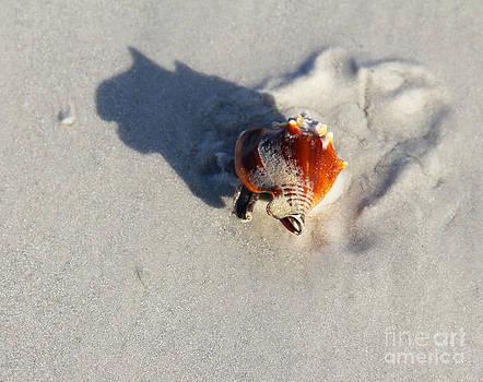 Fighting Conch by Carol McCutcheon