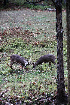 Fighting Whitetails by Al Blount