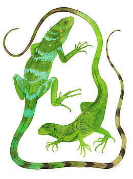 Fijian Iguanas by Cindy Hitchcock