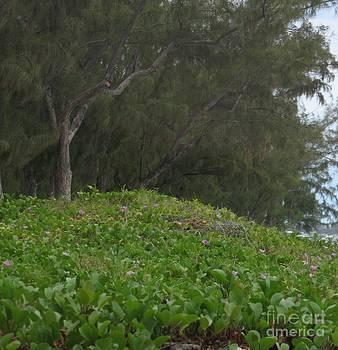Filaos - Ile De La Reunion - Reunion Island by Francoise Leandre
