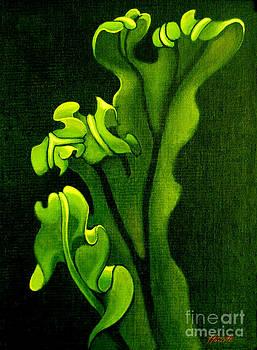 Filmy Fern Hymenophyllum by Patricia Howitt