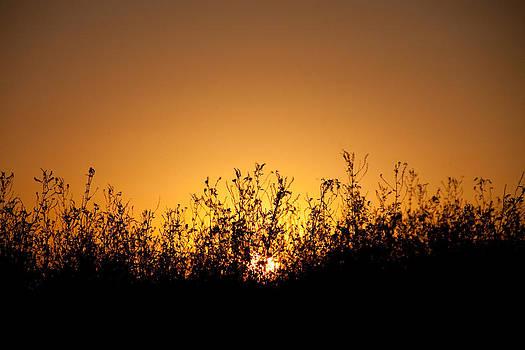 Final Sunset by Bob Mintie