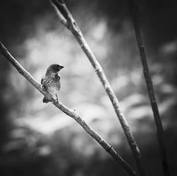 Finch On Branch by Bradley R Youngberg