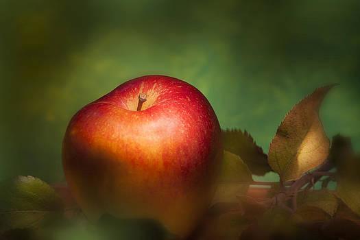Fine Apple by Martin Joyful