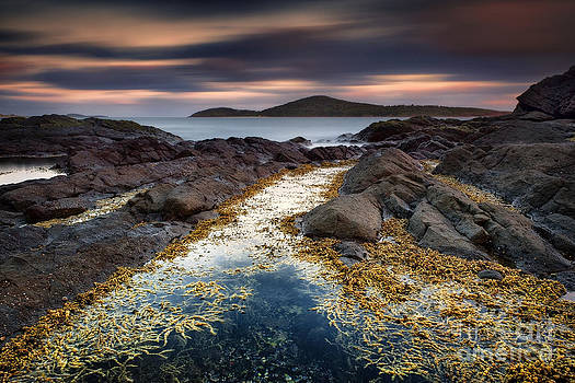 Fingal Bay - The Golden path by Michael Howard