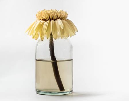 Finished Flowering by Yvon van der Wijk
